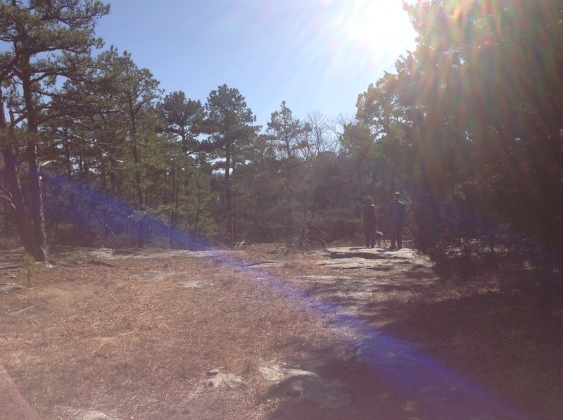 A piney glade on a sunny day!