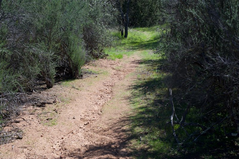 The trail is sandier in this portion of the trail than the other side.  This makes climbing up the trail from the High Peaks side more difficult than climbing up from Old Pinnacles Trailhead side.