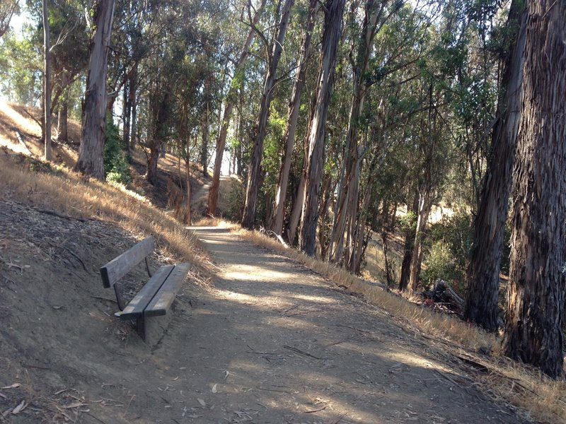 Bench in the shade and overlooking the lake.