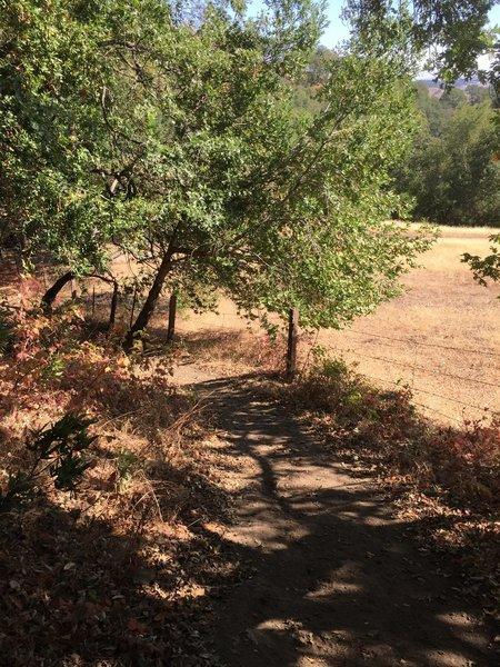 Virgil Williams Trail.