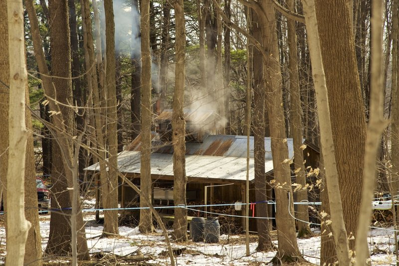 Maple syrup time at the sugar shack.
