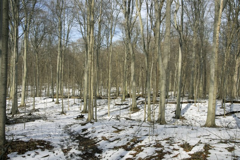 A late winter hike through the beech maple forest.