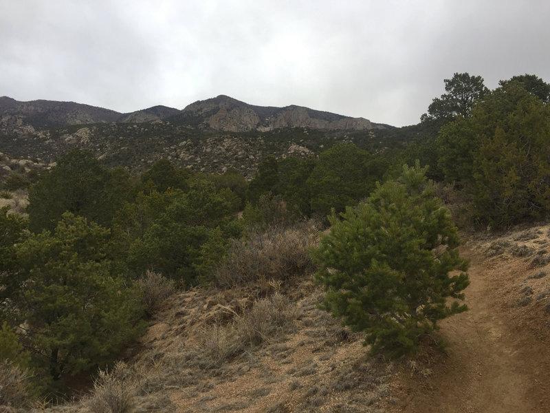 Desert cacti give way to pine trees as Embudo Trail climbs the Sandia Mountains.