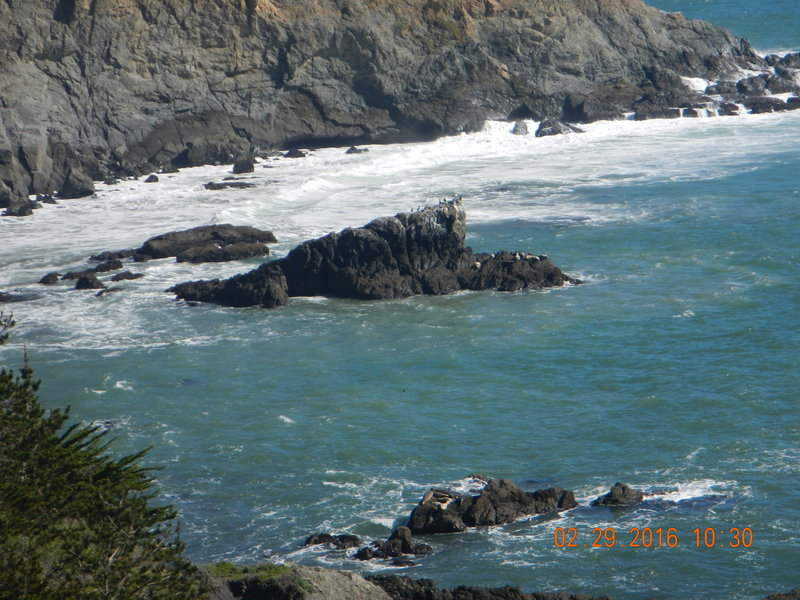 Seals can be seen sunning themselves just off of Point Bonita.