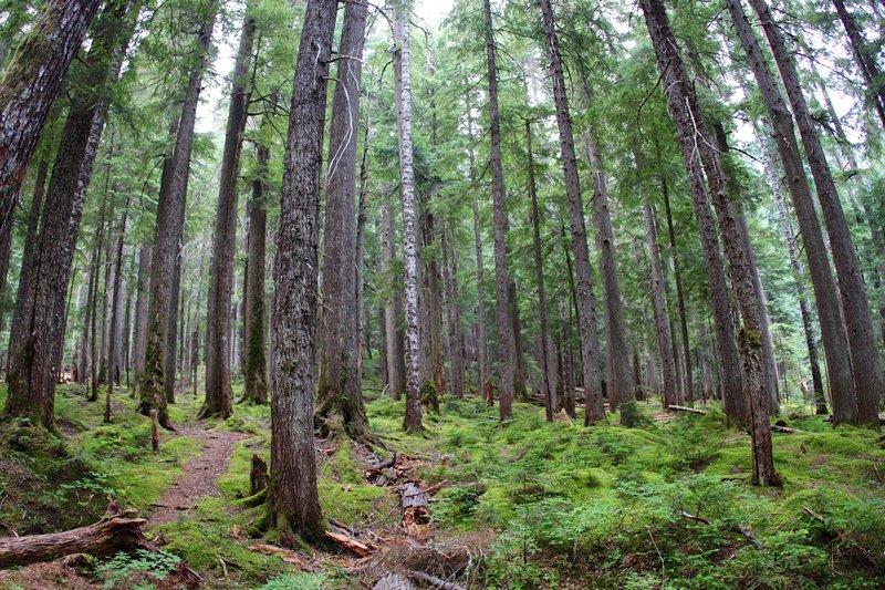 Trekking through deep forest.