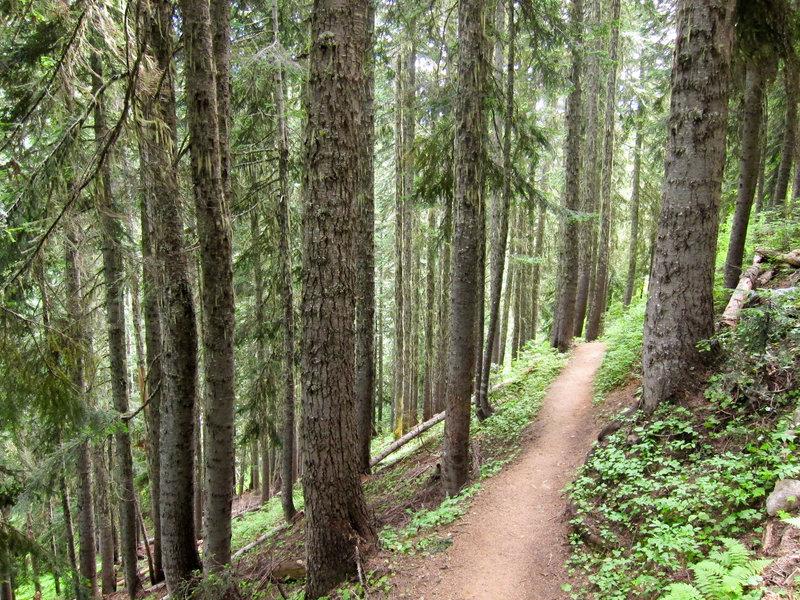 Maple Pass Loop.