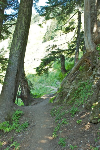 Sauk Mountain Trail.