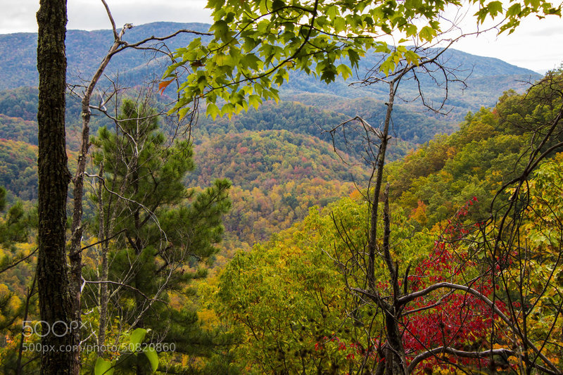The Smokies show off their fall colors near the Little Greenbrier Trail.