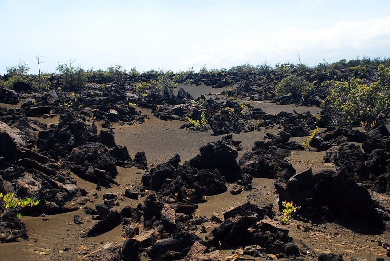 Approaching the Ka'u Desert Trail- volcanic ash and A'a Lava. with permission from Andrew Stehlik