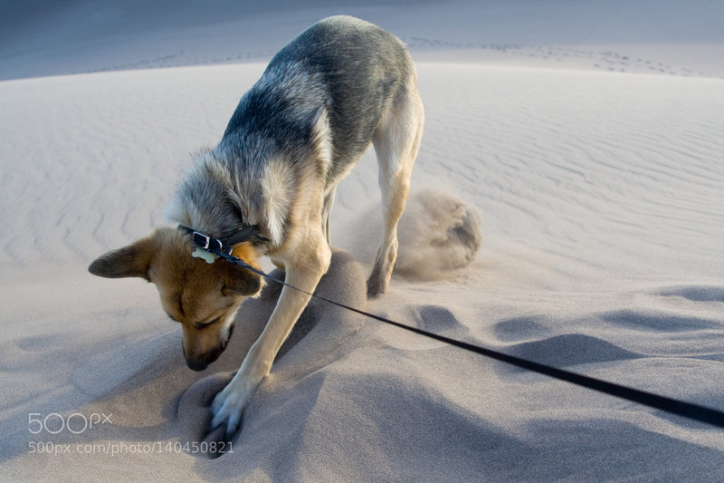 Digging for buried treasure at the Great Sand Dunes.