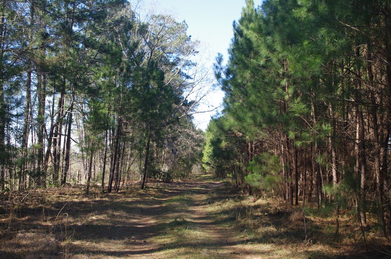 The last half of the trail on Forest Service Road.