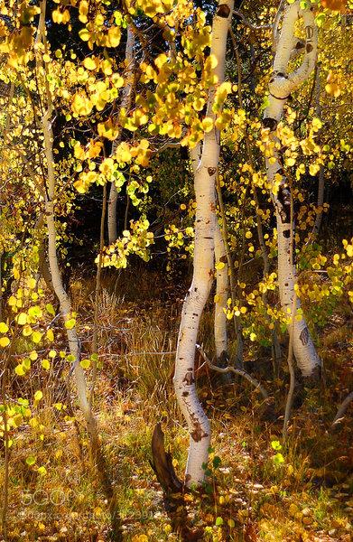 Fall colors at Cedar Break.