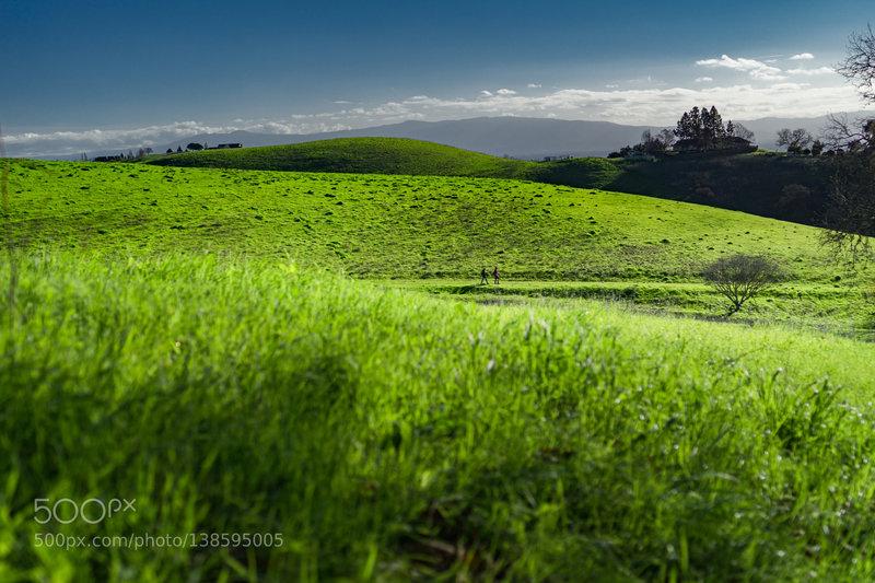 Vibrantly green hillsides at Mission Peak Park