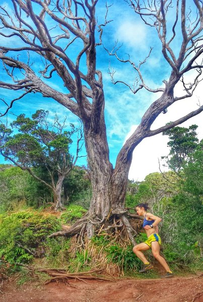 Making the turn on the Aiea Loop Trail.