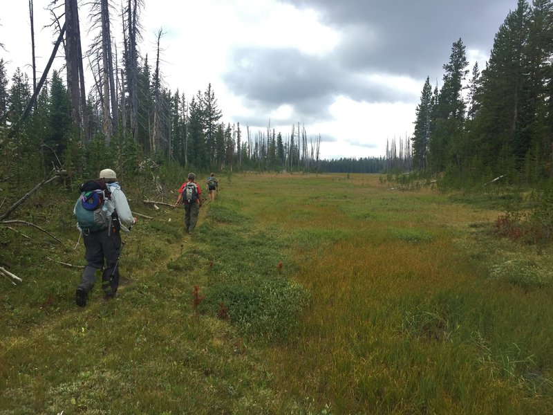 The trail passes an occasional meadow as it nears Summit Lake.