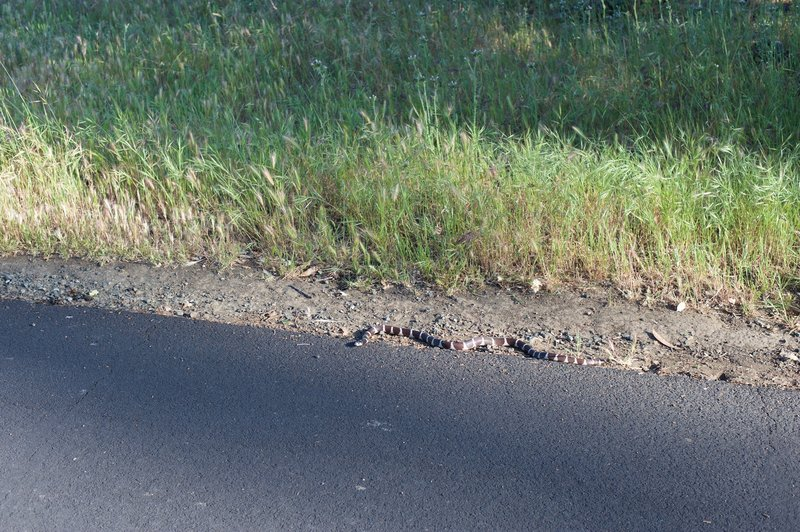 A snake suns itself along the trail, causing walkers to give it a wide berth, but otherwise, leaving people alone.