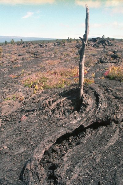 Lava flowed around a tree. with permission from Ronald Losure