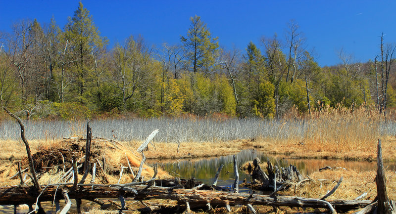 Headwater marshes are a common sight near the Woods Road Trail.