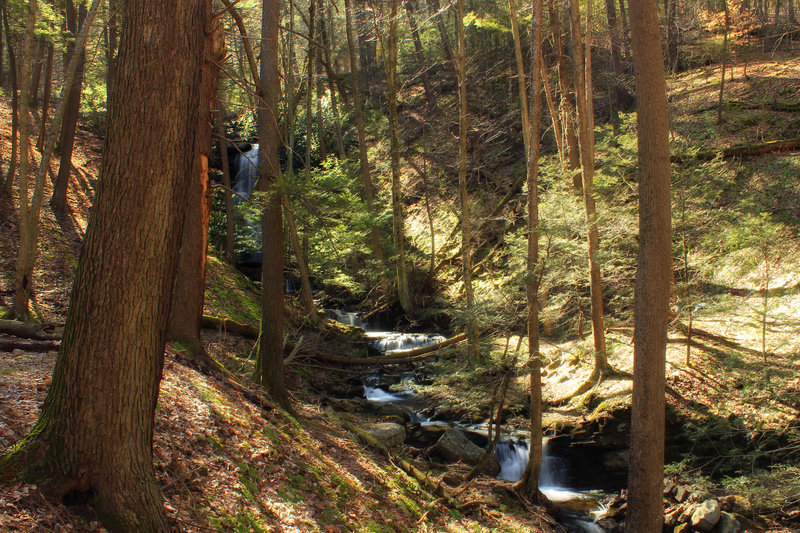 A ravine filled with hemlock trees diverges from the Silver Spray Falls Trail.