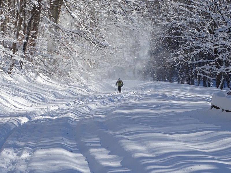 Cross-country skier in Rock Creek Park.