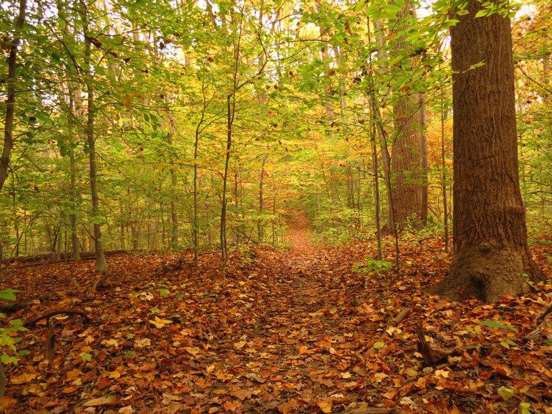 Pine Trail.