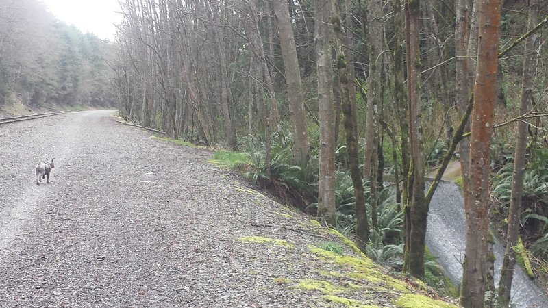 First 1.6 miles uphill on packed gravel: tracks on left, creek on right.