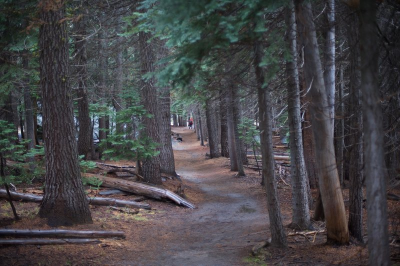 The trail making its way down to Taft Point.
