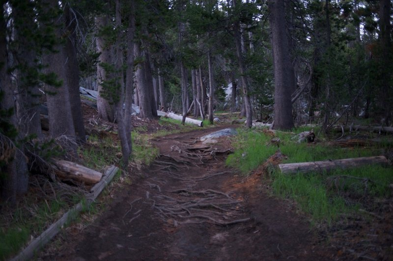 The trail leading to Clouds Rest.  You can see the roots scatter across the trail, so make sure you watch your step.