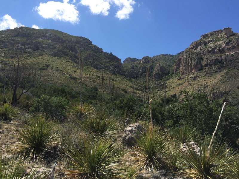 View of the limestone cliffs and mountains from the Smith Spring Trail.