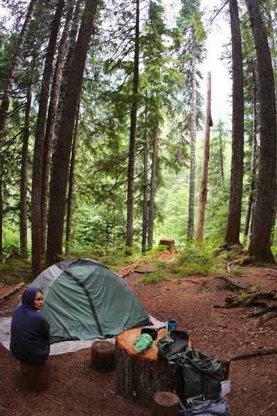Stillwell Campsite in deep forest.