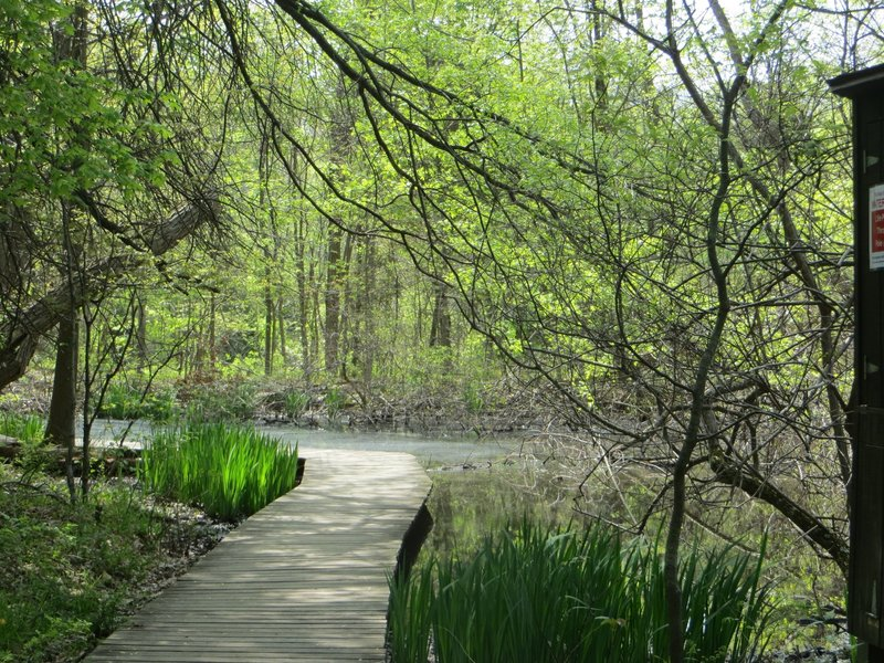 Marsh pond.