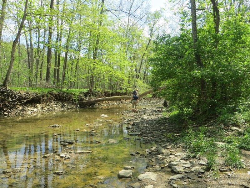 Stream crossing the trail.
