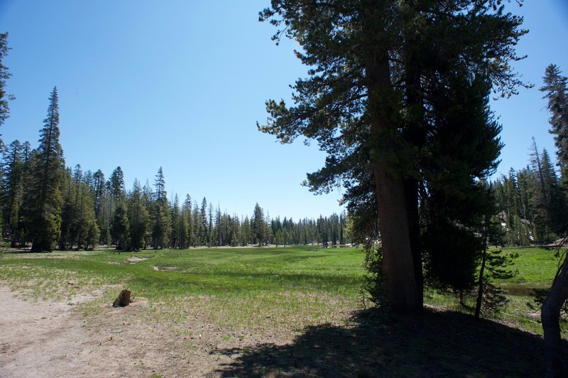 A beautiful alpine meadow awaits you as you hike along Kings Creek Trail. The trail skirts the perimeter of the meadow, allowing it to be preserved for wildlife and plants to flourish.