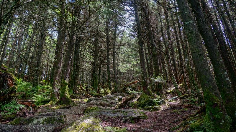 Deep Gap trail at Mt Mitchell.