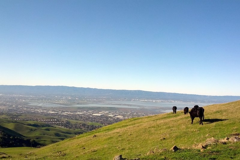 The skyline is easy to see from way up here on the Hidden Valley Trail.