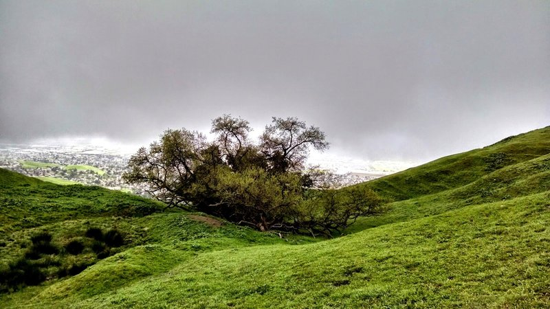A rainy day on the Ohlone Wilderness Trail.