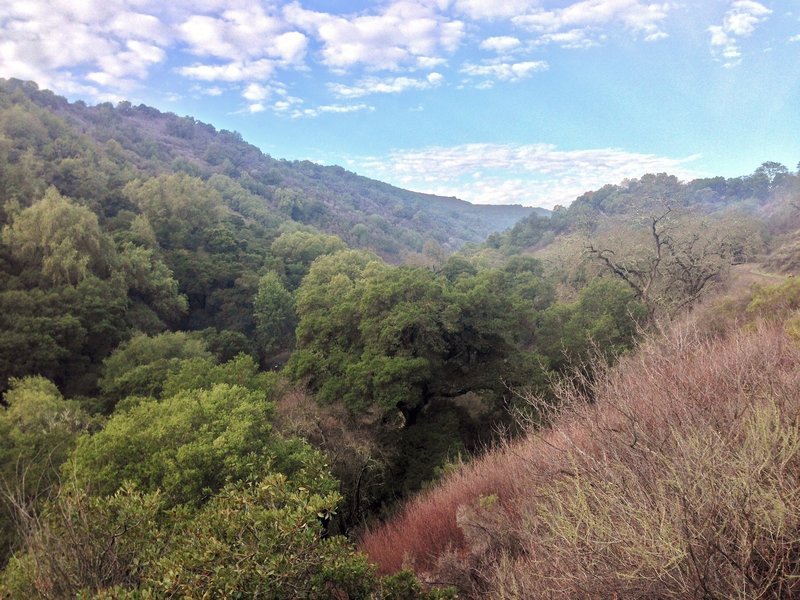 View in Rancho San Antonio Open Space Preserve.