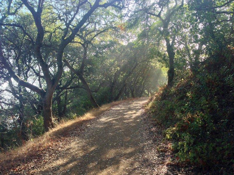 Rancho San Antonio.