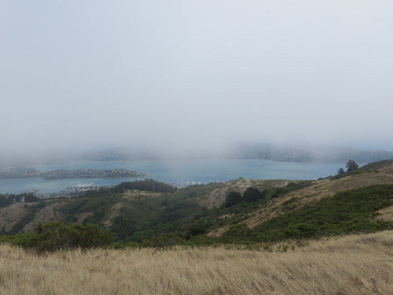 A foggy day on the Miwok Trail.