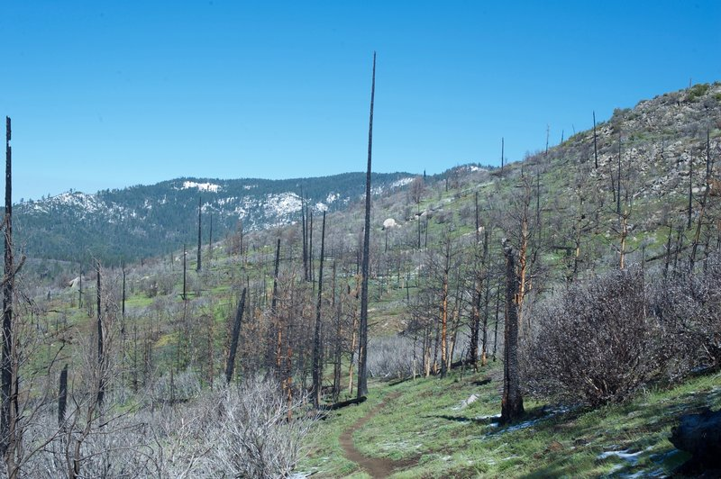 The trail passes through the remains of the Big Meadow Fire in 2009.
