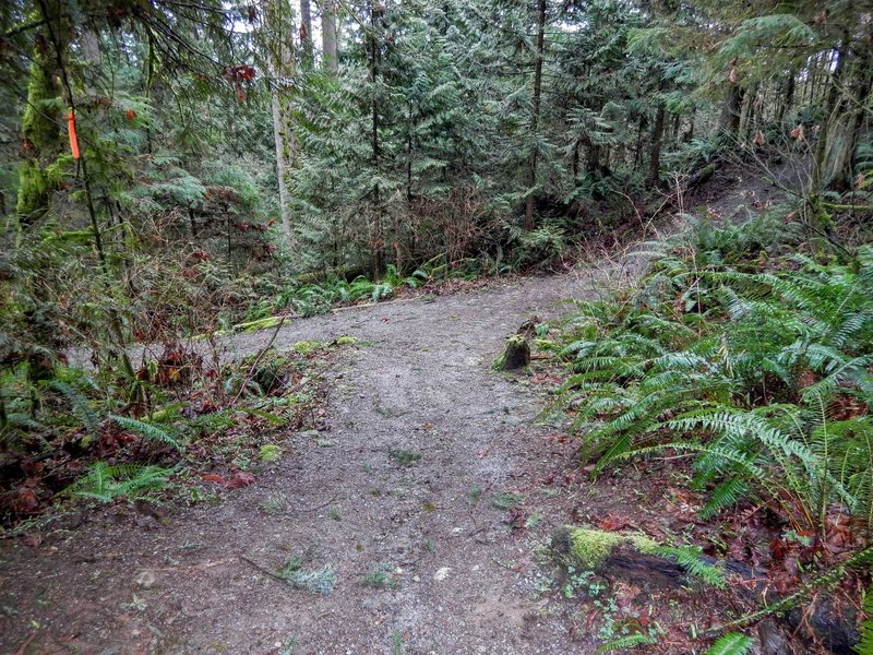 Where the Silver Ghost Trail and the Thornhill Trail meet.