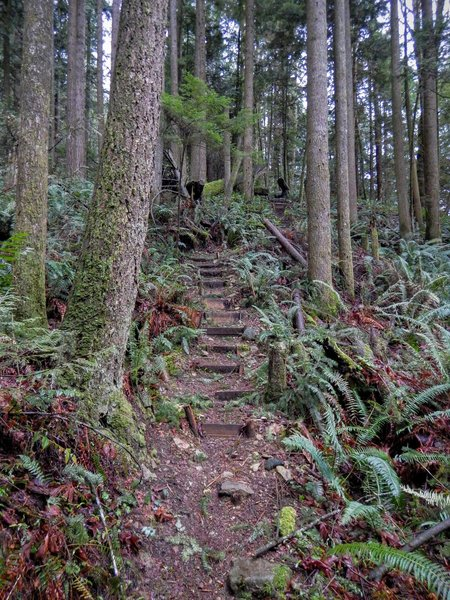 The first bunch of stairs cut into the side of the mountain.