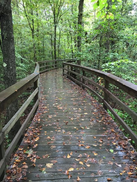 The start of the Boardwalk Trail on a wet fall day.