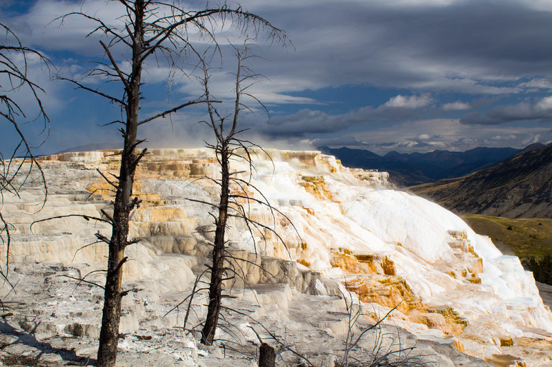 Canary Springs in Mammoth Hot Springs.