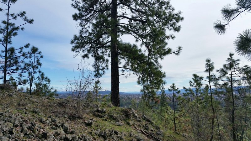 View of downtown Spokane . . . and a pine tree.