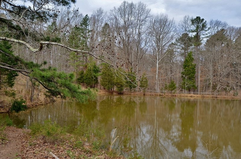 Farm Pond in Wilkerson Nature Preserve.