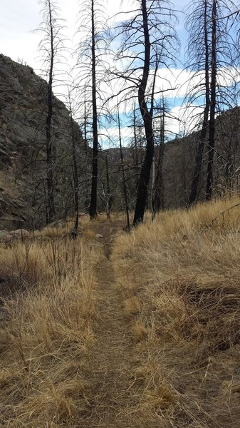 The fire in 2012 left so many burned trees. Some have fallen, but many are still standing.