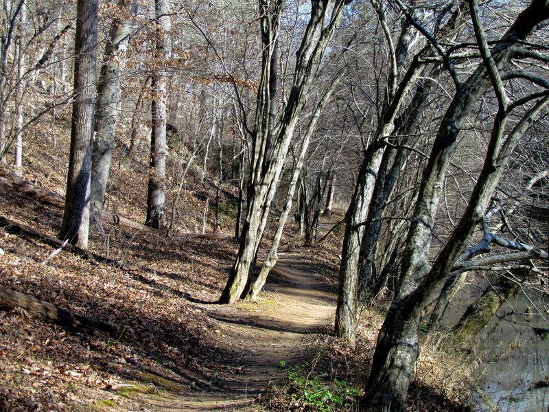 The trail along the Eno River.