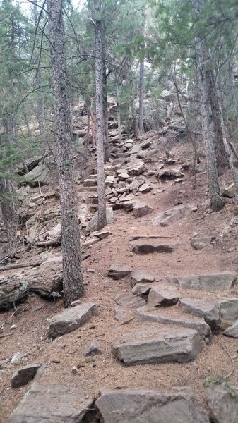 "Section of the trail with ""stairs."""