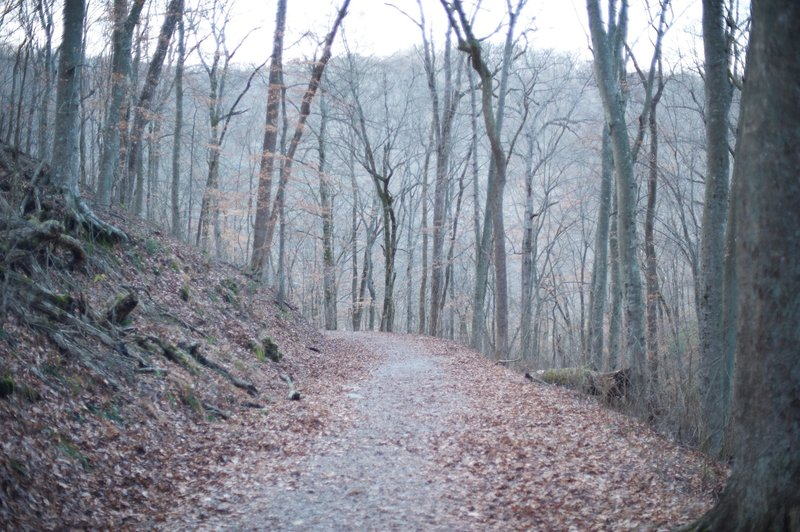 The trail leading down to the River Styx Spring.